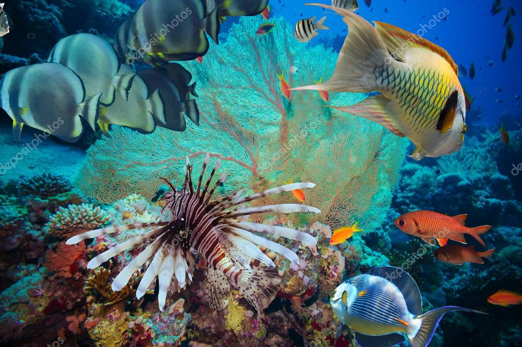 Colorful underwater reef with