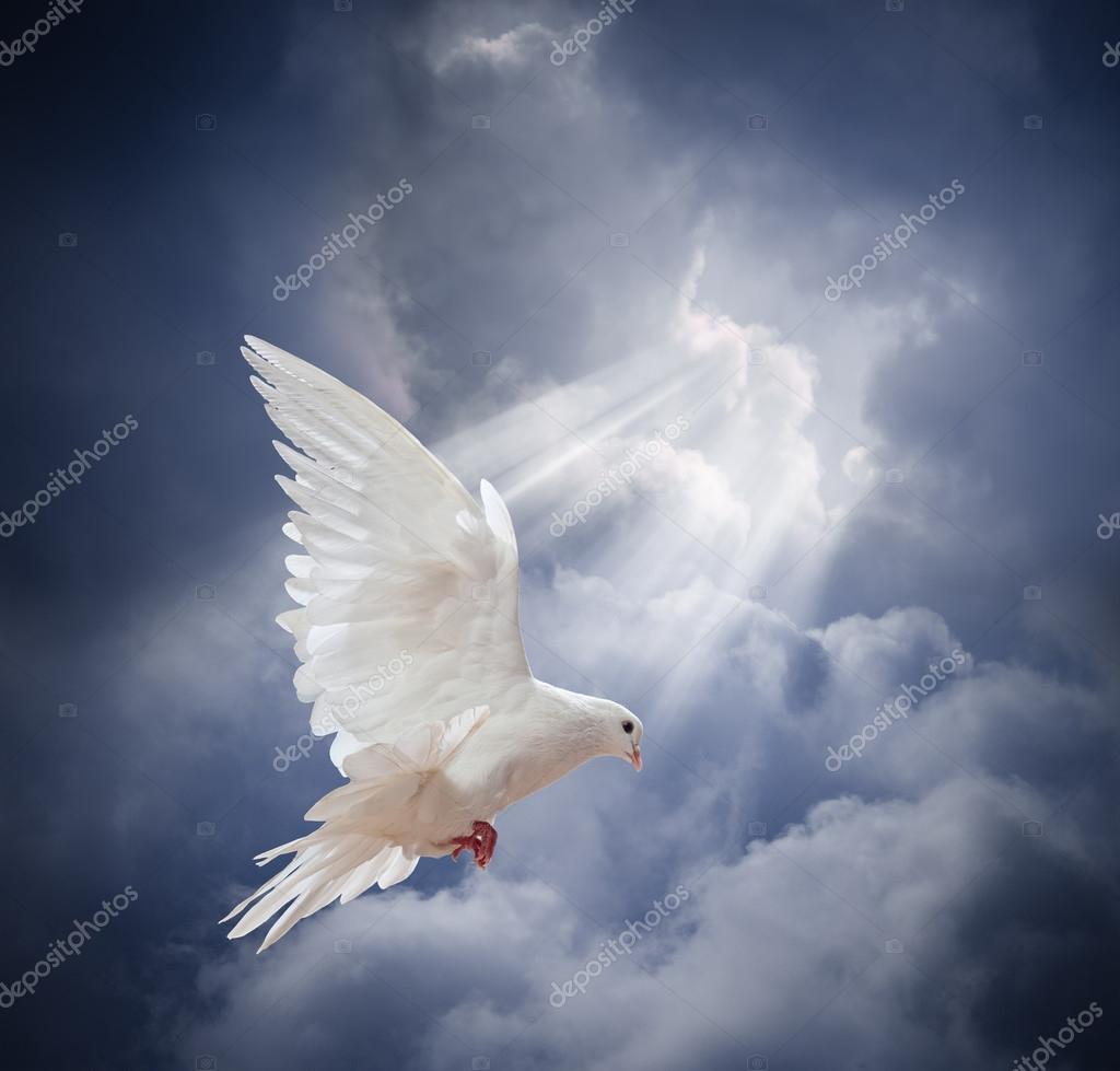 Flying white dove on  sky