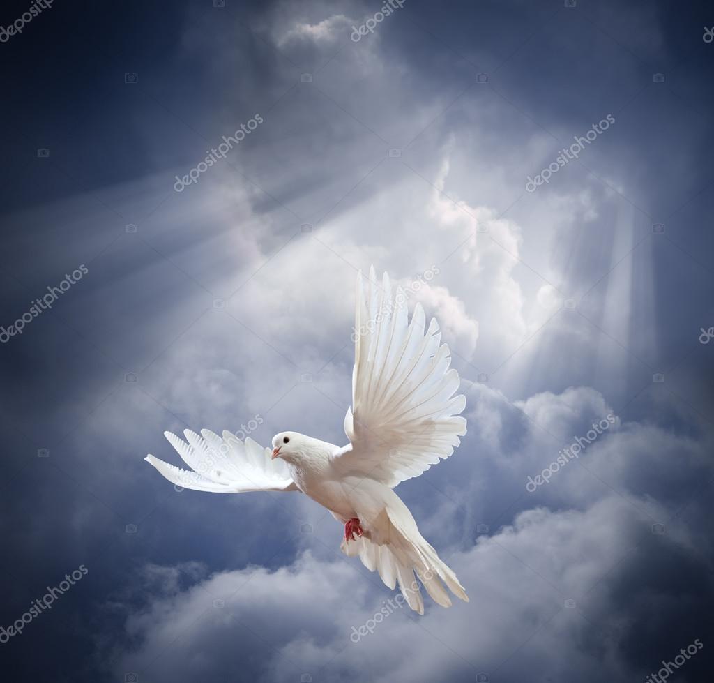 Paloma Blanca Volando Sobre Cielo Foto De Stock Irochka 69396511