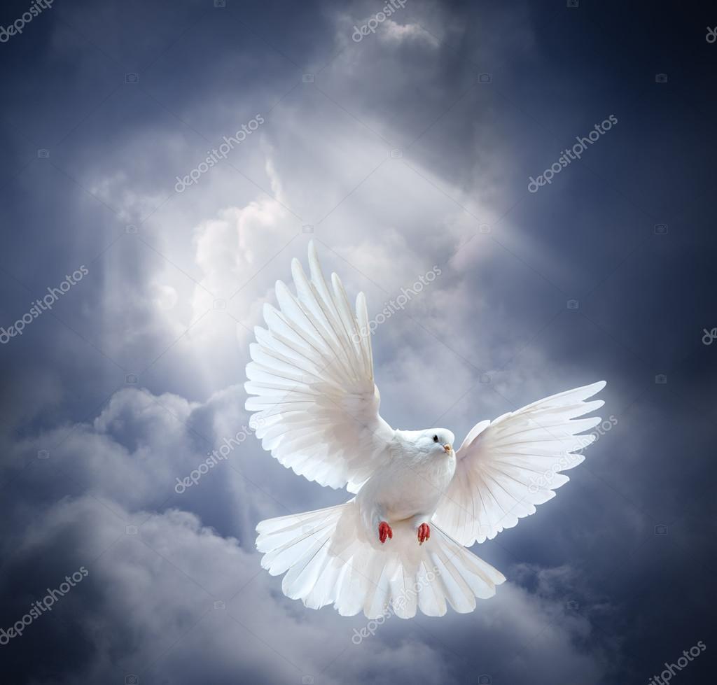 Paloma Volando De Frente Paloma Blanca Volando Sobre Cielo Azul