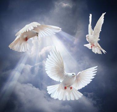 Flying white doves on  sky