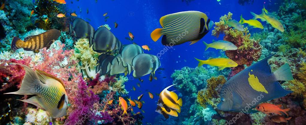 Colorful underwater reef  and  tropical fish