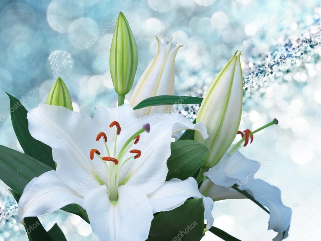 White Lilies Flowers On A Blue Background Stock Photo Irochka