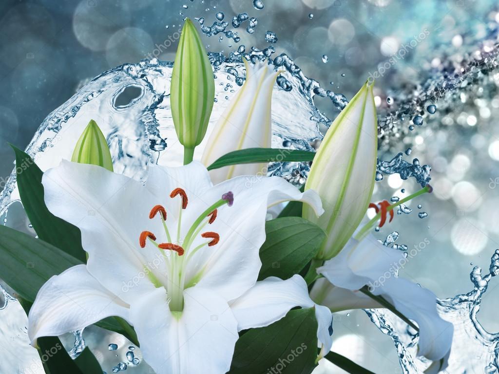 Lily flowers on blue background stock photo irochka 92131572 lily flowers on blue background stock photo izmirmasajfo