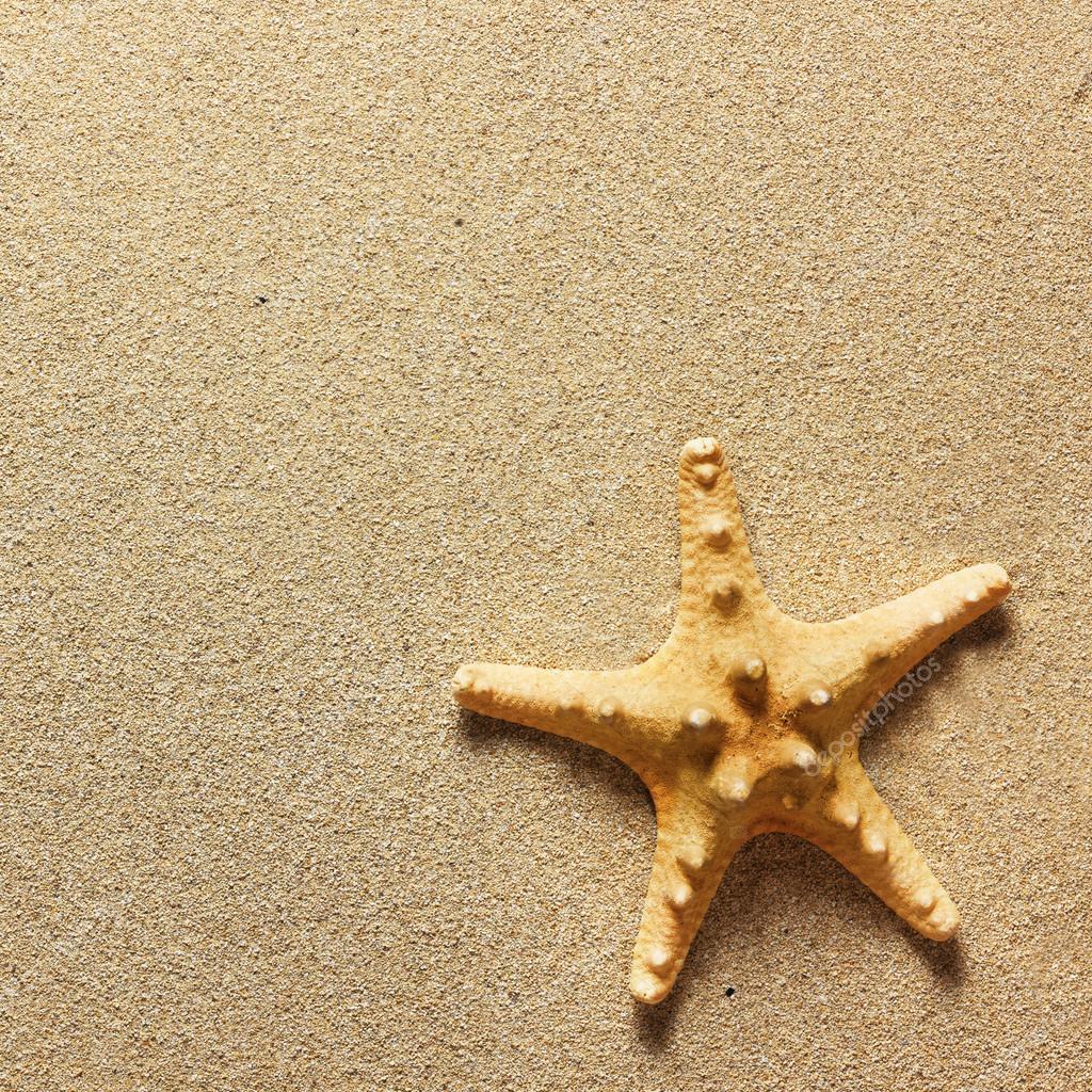 829d7142ac02 étoile de mer avec du sable comme fond — Photographie Irochka ...