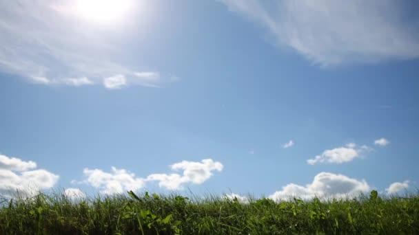 Little girl goes on green grass