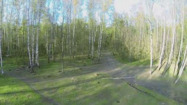 Březový les s zeleň