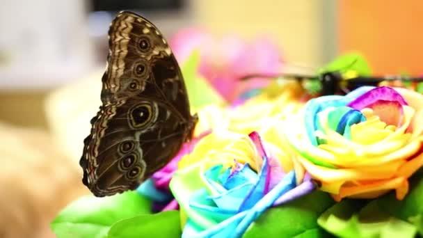 Krásný černý motýl