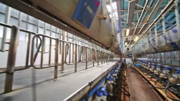 Die Zeilen mit Melkmaschinen auf einem großen Milchviehbetrieb.