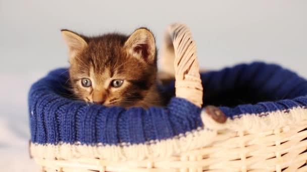 kitten sitting in a basket