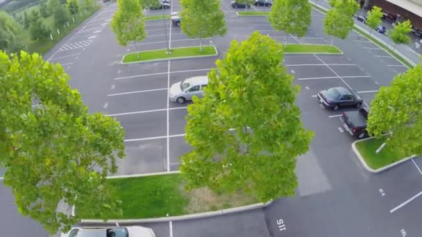 Trees with green foliage on car parking