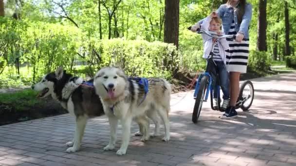 Dva psi a dívka s chlapcem na skútru
