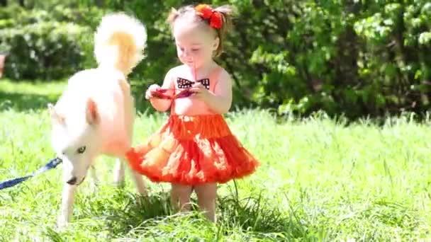 Weißer Hund husky und kleine Mädchen