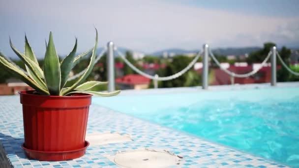 Tropická rostlina v hrnci modrého bazénu na terase v letním dni