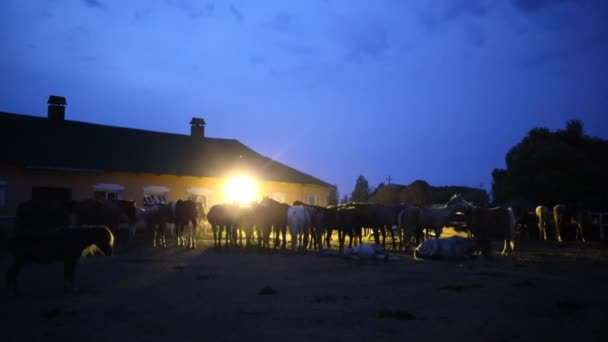 horses standing and lying at paddock