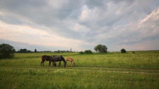 koně pasoucí se na zelené trávě