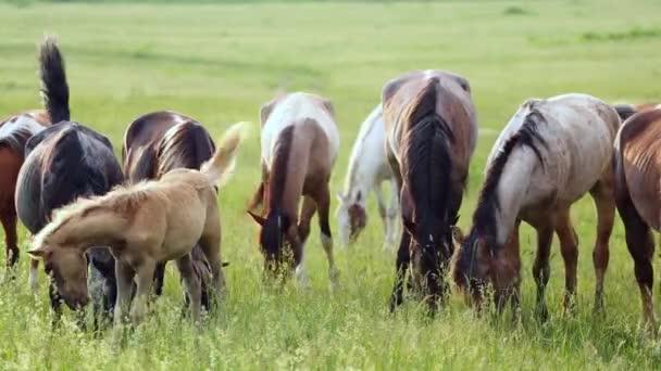 Koně pasoucí se na louce