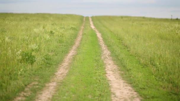 empty green summer meadow