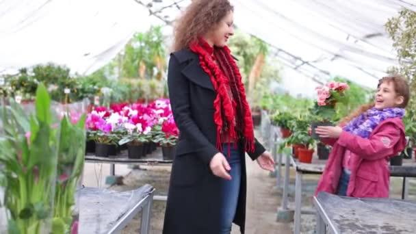 Matka dcera dává kvetoucí begonia