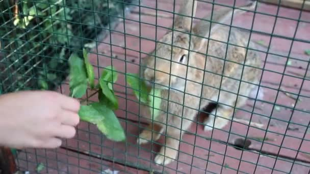 Hand of child feeding fluffy rabbit