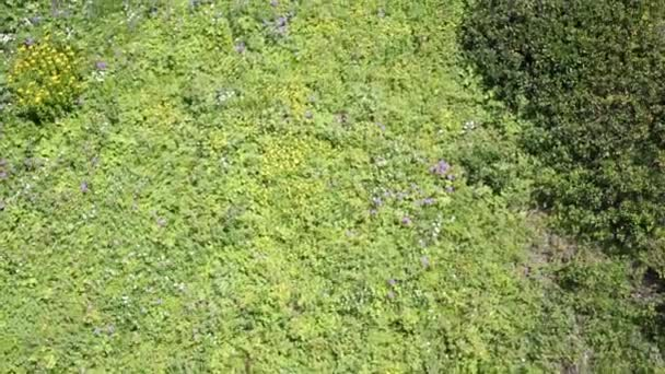 Green herbs and wild flowers in mountains