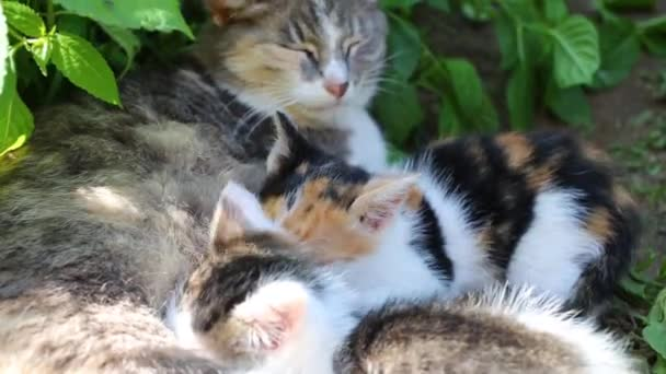 Cat with two kittens lying on grass