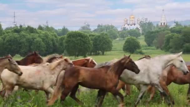 herd of horses running