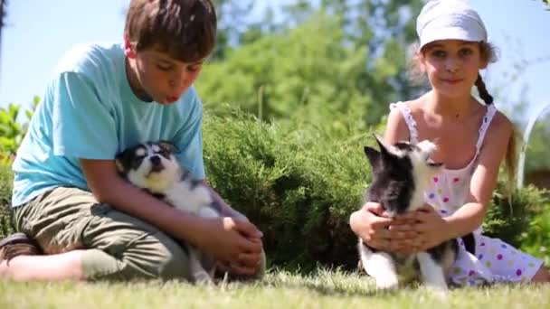 Boy and girl with two puppies husky