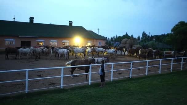 Csorda ló a paddock a stabil kora reggel