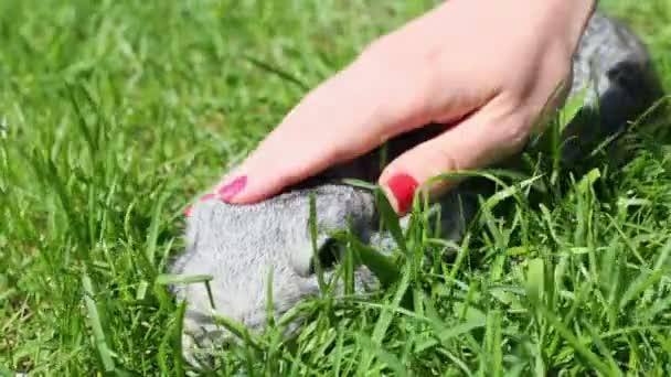 Female hand strokes rabbit