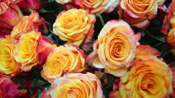 Banda krásné oranžové růže