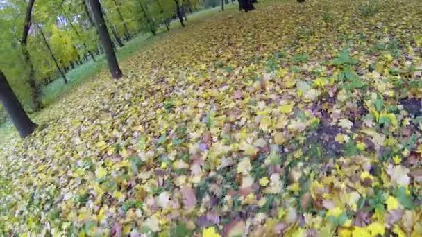 Vítr fouká spadaného listí