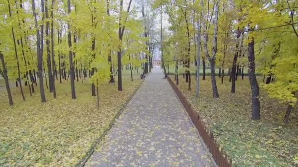 Parku uličky mezi stromy