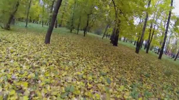 színes lombú fák