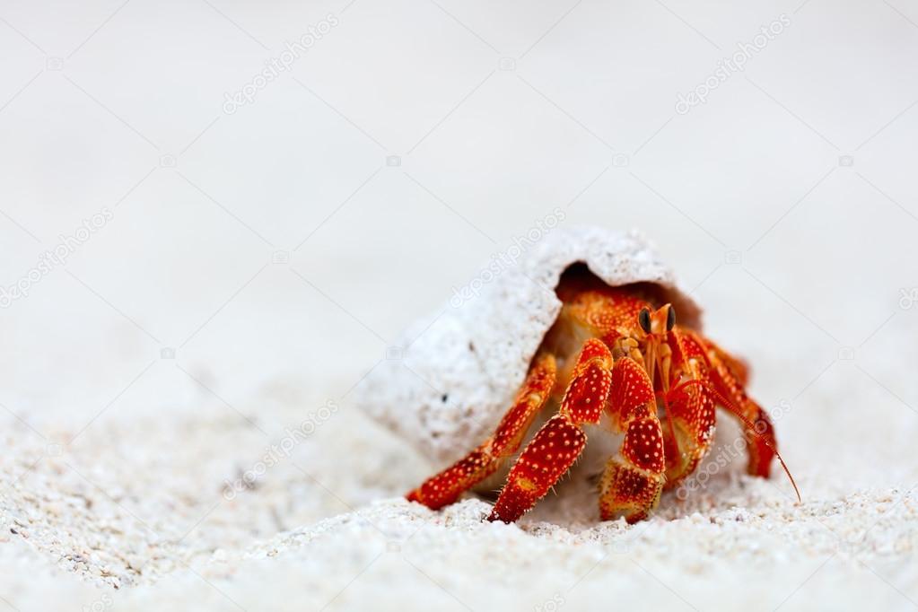 cangrejo ermitaño en la playa — Foto de stock © shalamov #107494766