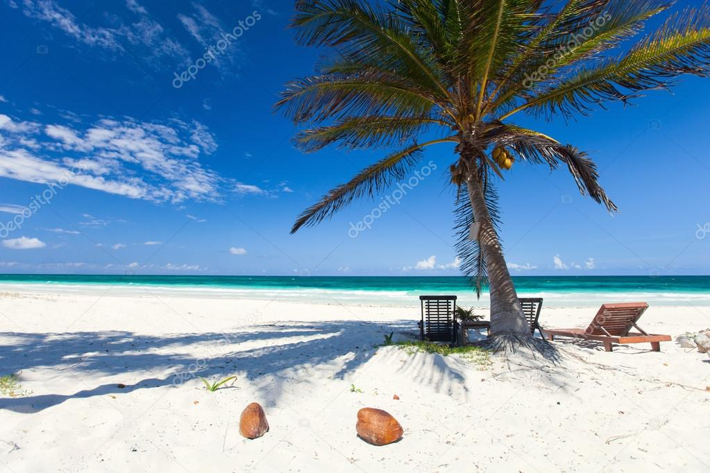 Coconut palm at beach