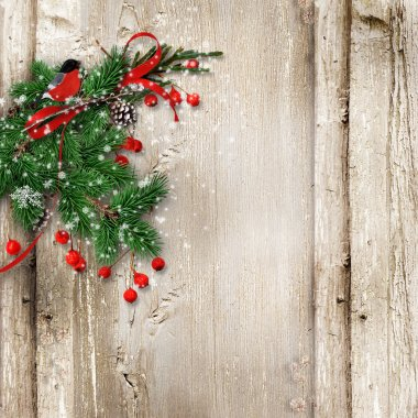 Christmas vintage wooden background with fir branches, bullfinch