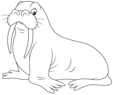 Walrus on a white background