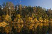 podzimní lesní jezero