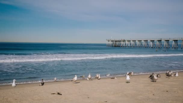 Seagulls and surfers on the Hermosa beach in California, USA