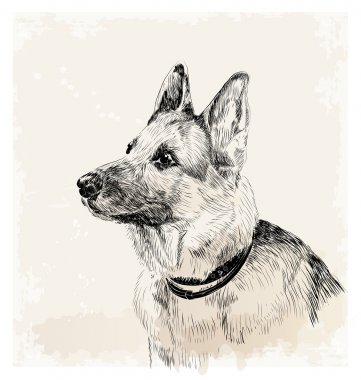 ink portrait of the german shepherd dog