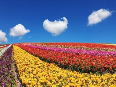 "Картина, постер, плакат, фотообои ""Buttercups сад созрели для сбора урожая"", артикул 117000736"