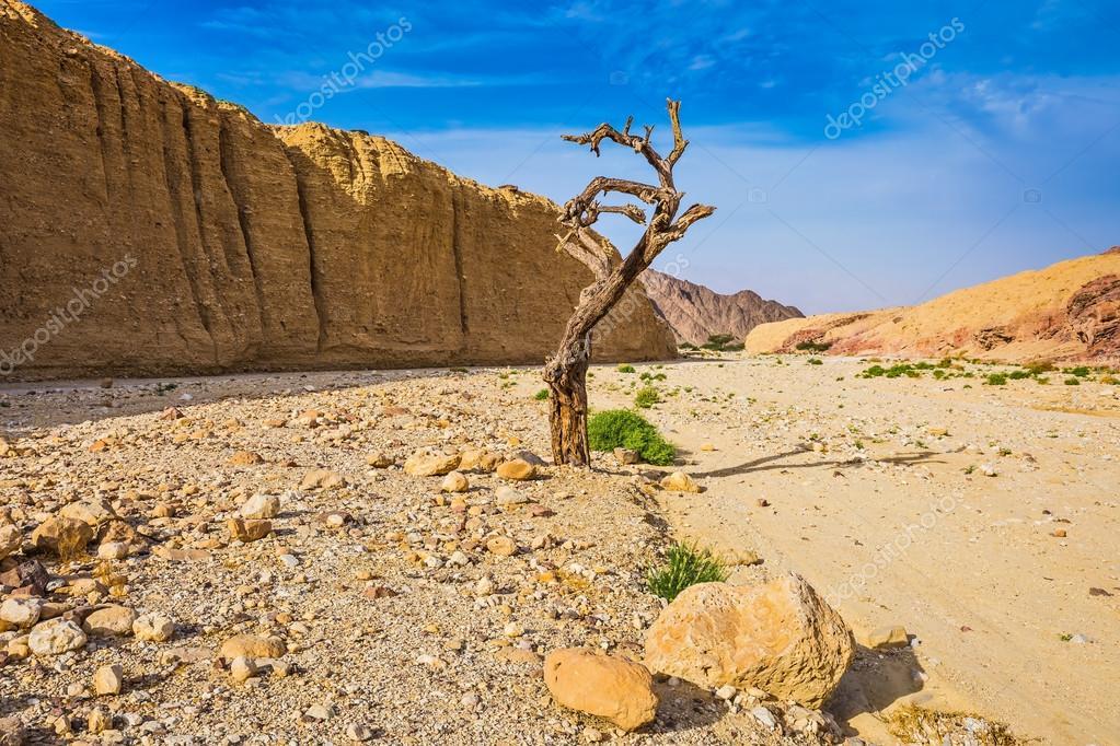 The desert in neighborhood of sea resort Eilat