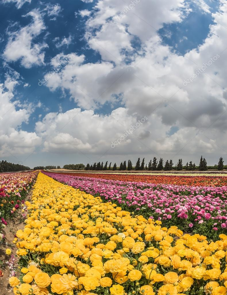 field of yellow and red flowers