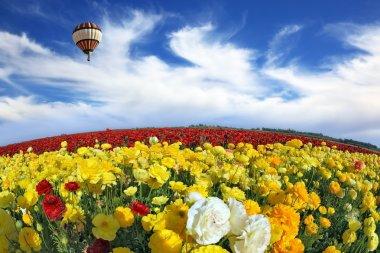 Air balloon over buttercups field