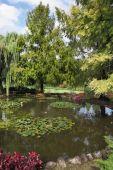 mělký rybník a květiny