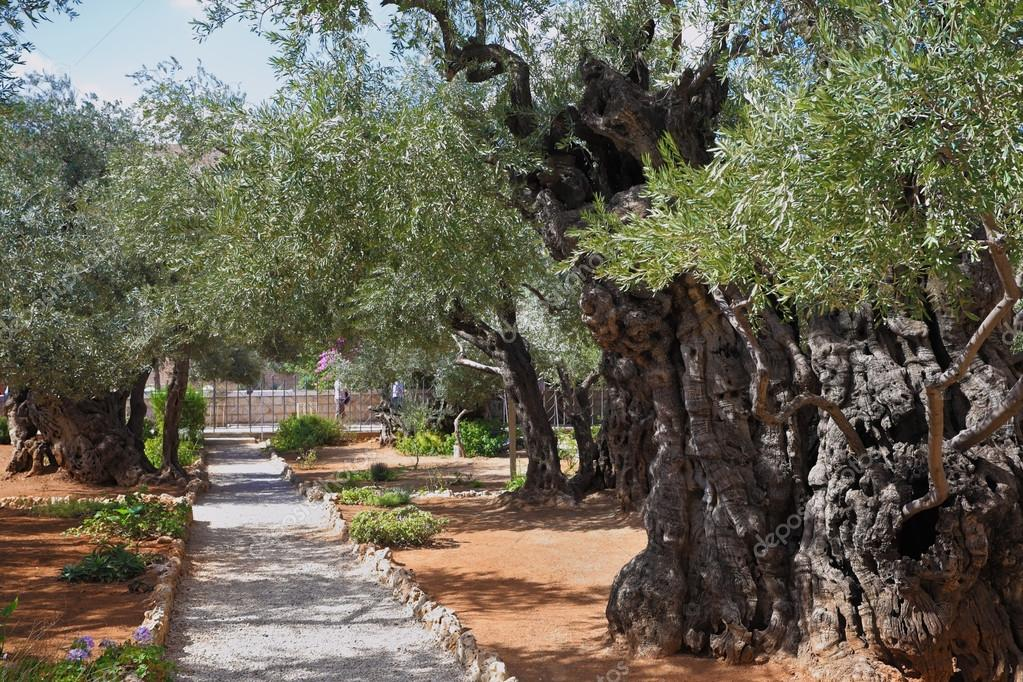 The path in the Garden of Gethsemane