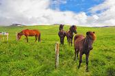 Well-groomed koně na louce