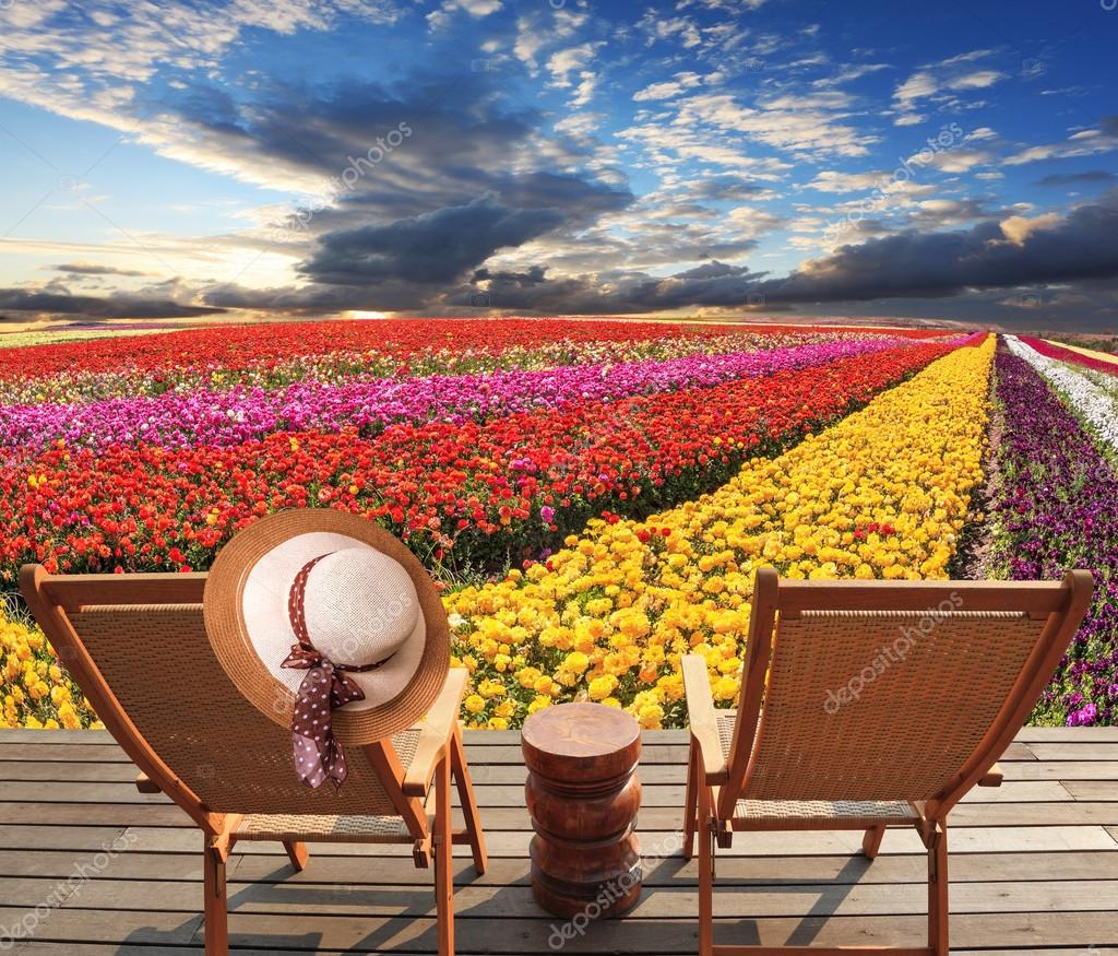 Due sedie a sdraio sulla piattaforma sono i campi di fiori colorati. In uno  appeso elegante cappello di paglia — Foto di ... 623048b10a3e