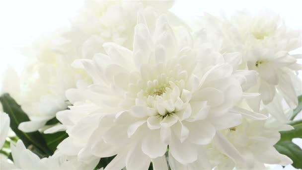 Krásnou kytici bílých chryzantémy na bílém pozadí. Mění se velikost rámce.